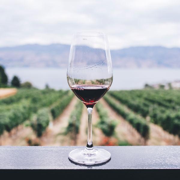 copa de vino con viñedo de fondo